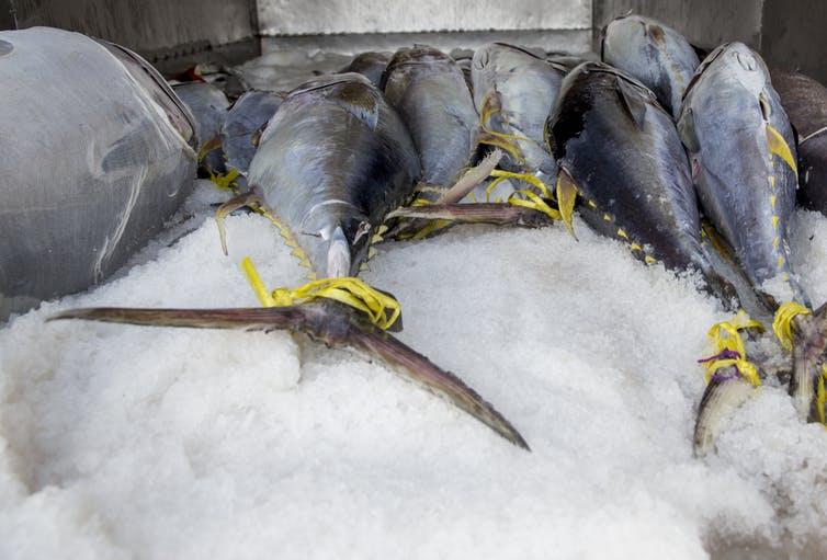 CeMAT-Insider-tuna.jpg
